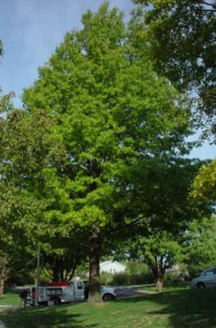 tree-service-kansas-city