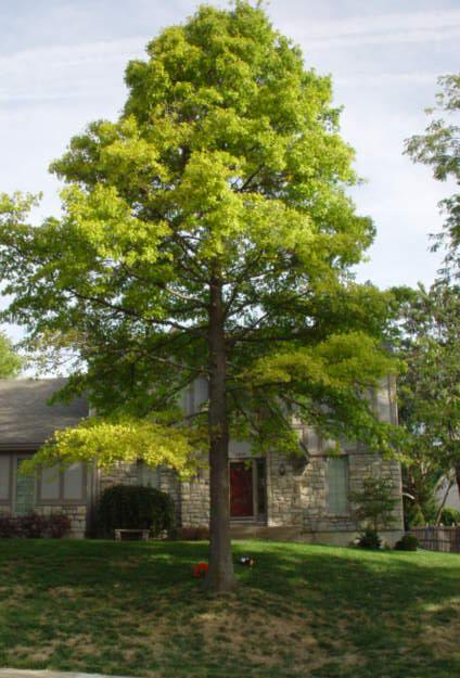 Tips On How You Can Take Care Of Your Trees Kansas City Arborist Tree Spraying Tree Doctor