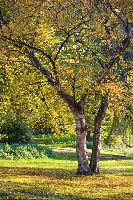 Top 8 Reasons Why We Need Trees Kansas City Arborist Tree Spraying Tree Doctor