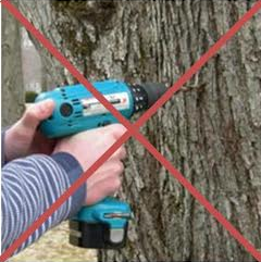 do not drill trees